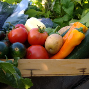 organic food in your orlando home