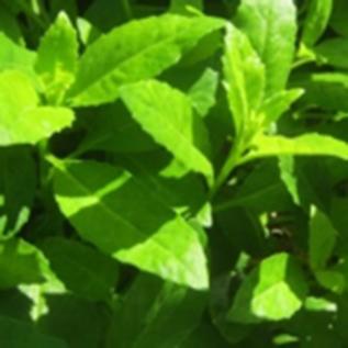 spinach gardening service orlando