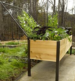 Trellis For A Vegetable Garden In Orlando